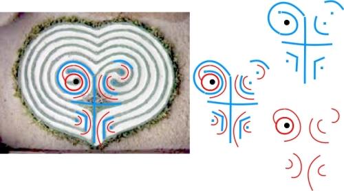 Abbildung 1. Keimstrukturen Herzlabyrinth